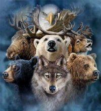 animali guida dello sciamanesimo